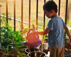 水やりをする子供